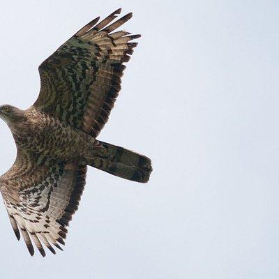 Great Batumi Raptor Migration by Aki Aintila