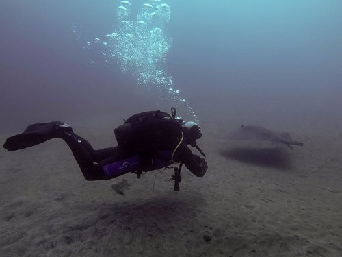 Diving with rays