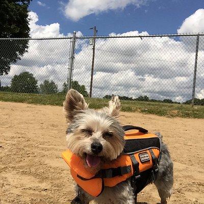 My little dog Will enjoying the sunshine at Bow Wow Beach