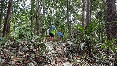 Punta Laguna Mexico the Spider Monkey Reserve