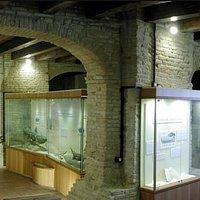Il museo paleontologico - l'evoluzione della vita marina e la conquista della terra ferma