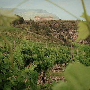 Doric temple and vineyards... a Sicilian landscape!