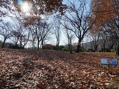 落ち葉の上を歩くのは、気持ちがいい。