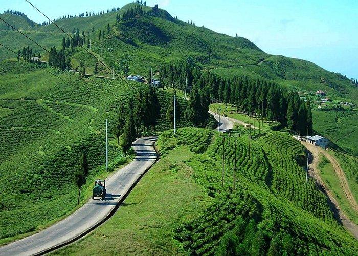 Breathtaking view of tea garden. (Pic taken from google search)