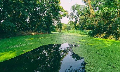 Petit étang où l'on peut louer des pédalos