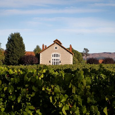 Etude winery and tasting