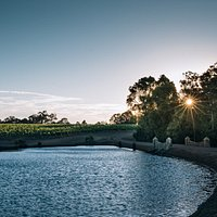 Tree-lined driveway at sunset, passing through the vines at Heydon Estate.