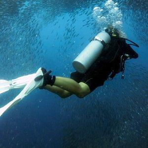 Sardines. Napaling