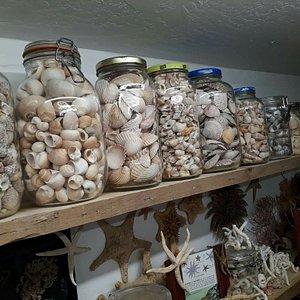 "The ""Friday"" Seashell Museum"