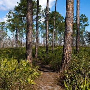 Pfundstein Trail
