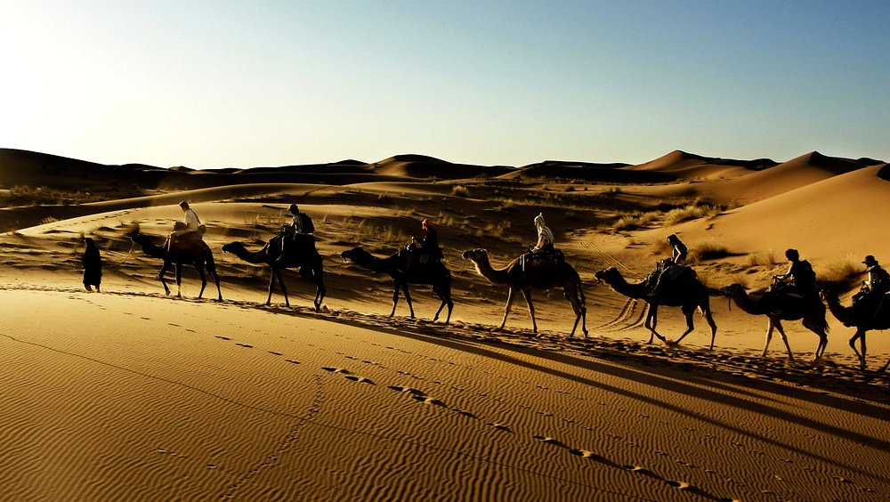 Caravana de dromedarios atravesando las dunas del Sahara (Foto: @javigutierrezok )