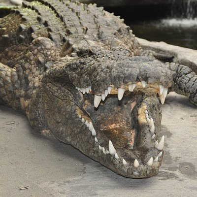 Sobek - Europas største krokodille