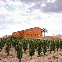 "Cellar and ""alberello"" vineyards in Feudo Maccari"