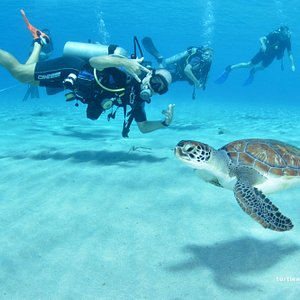 Join our Turtle Thursday trip to Westpunt!