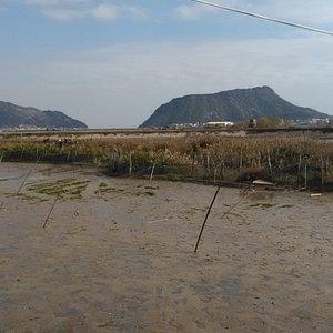 湿地の風景