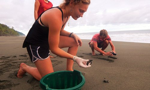 Release baby sea turtles on the beach