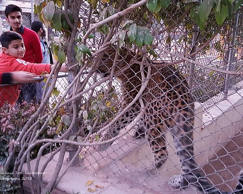 Very dangerous. A kid trying to touch a leopard and elders just watching