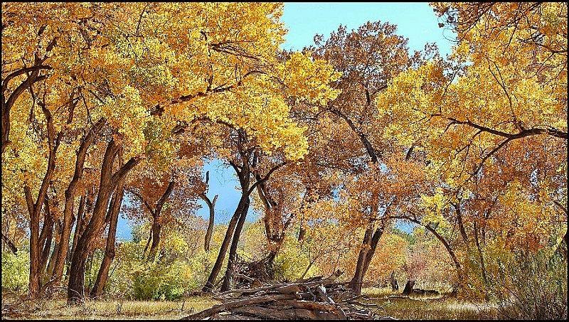 Willow Creek Trail, Rio Rancho, New Mexico. October 15, 2012.
