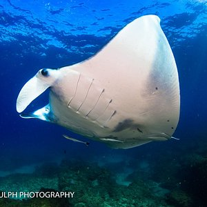 Manta Rays can be spotted here in Summer. November-March