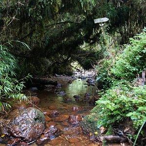 Chepu forest