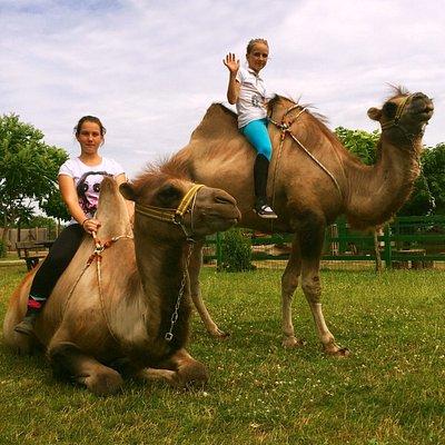 Bella Állatpark Vadaspark, állatkert, kisállatkert Siófok
