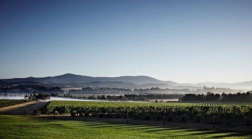 Domaine Chandon Green Point Vineyard