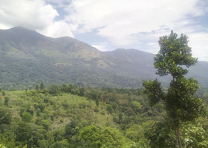 Bison valley near Munnar. Just 13 Km from Munnar and very scenic place
