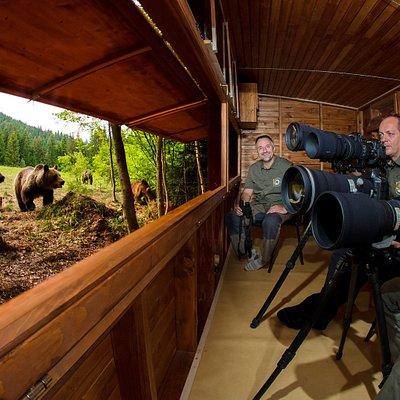 getlstd_property_photo   bear watching, observator de ursi, medveles, erdély, Tusnádfürdő