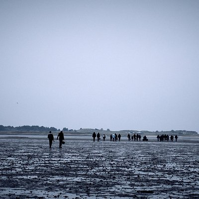 OysterSafari, walking 1,2 km into the Waddensea to pick as many oysters as you like.