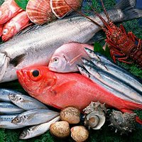 O melhor em pescados