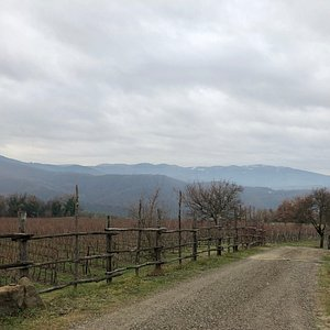 Looking out across the Vineyards in December
