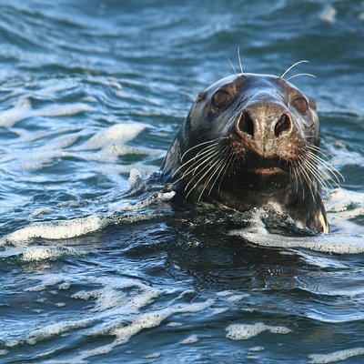 Dive with the friendly Grey Seals at The Farne Islands