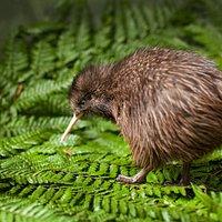 Meet kiwi
