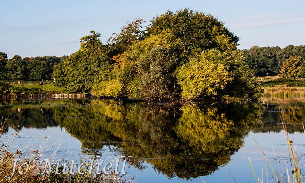 Early Morning Reflection in Pen Pond