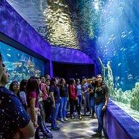 Tunel de tiburonario