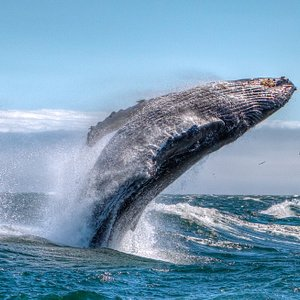Humpback whales visit our shores from April through Ovctober