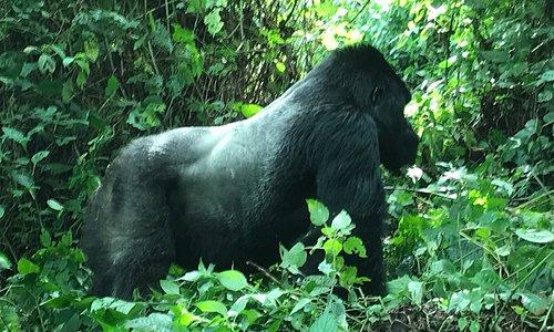 Quel bonheur de découvrir cette région de la RDC ! Gentillesse des personnes, Volcan , gorilles,