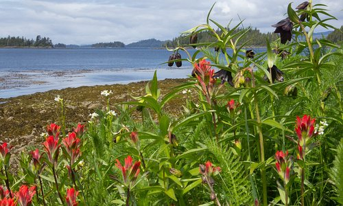 Wildflowers bloom all along the ocean beaches up to the subalpine mountain peaks