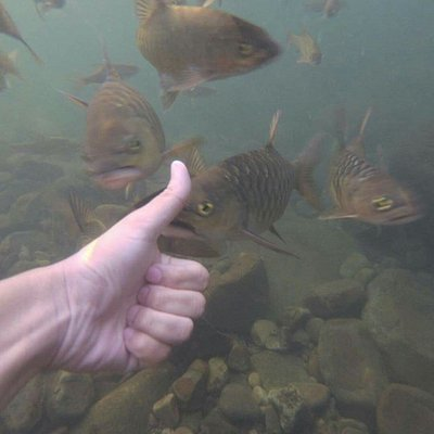 Want to try swimming with the fishes?here is the place to be