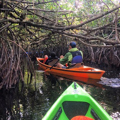 3 hour mangrove tunnel tour