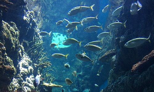Шарджинский аквариум