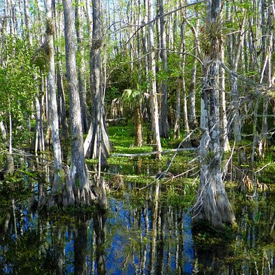 Big Cypress Loop Road