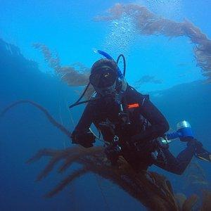Trident Diver - NAUI SCUBA Certification, Guided Dives, Kelp Forest, La Jolla