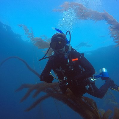 Trident Diver - NAUI SCUBA Certification, Guided Dives, Kelp Forest, La Jolla