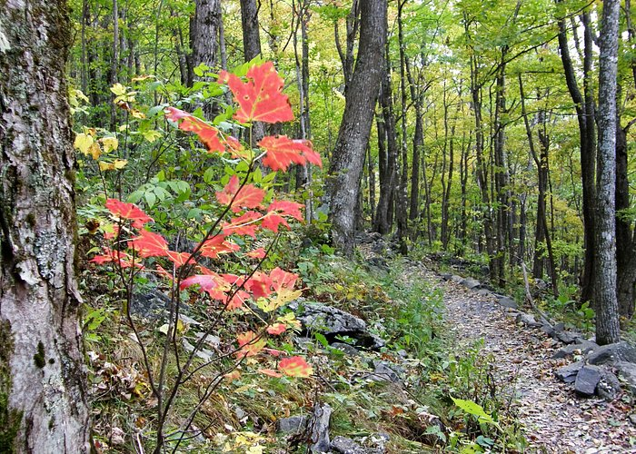 Fall colors make the hike to the top of Elk Knob even more enjoyable.