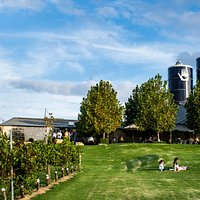 The winery lawns