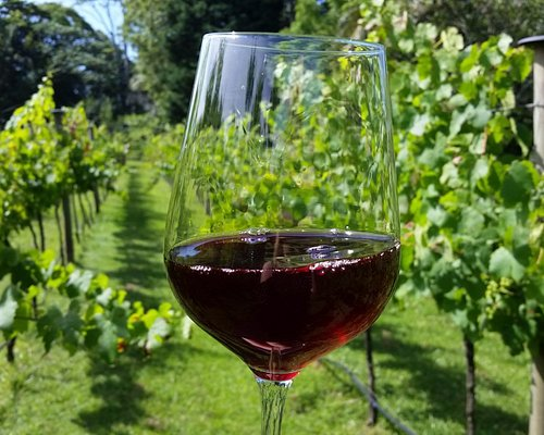 Enjoying a Glass in our vineyard