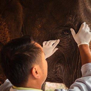 Routine Checkup at Elephant Village Hospital