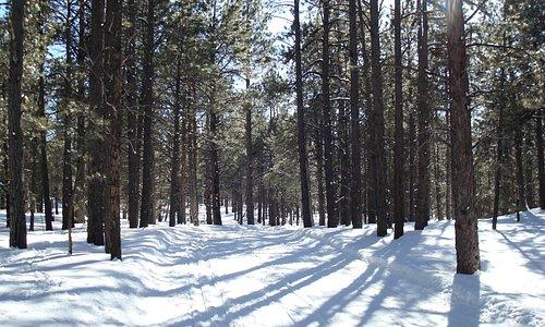 Cross Country Ski Trail, Flagstaff
