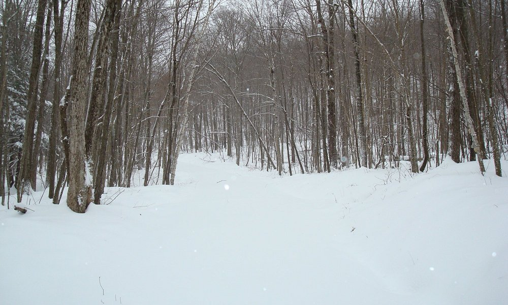 Cross Country Ski Trail, Mohawk State Forest